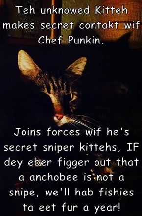 Teh unknowed Kitteh makes secret contakt wif Chef Punkin.   Joins forces wif he's secret sniper kittehs, IF dey eber figger out that a anchobee is not a snipe, we'll hab fishies ta eet fur a year!