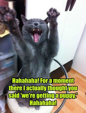 Hahahaha! For a moment there I actually thought you said 'we're getting a puppy.' Hahahaha!