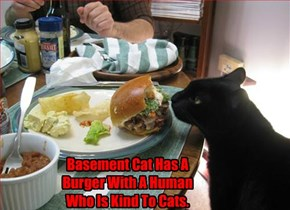 Basement Cat Has A Burger With A Human Who Is Kind To Cats.