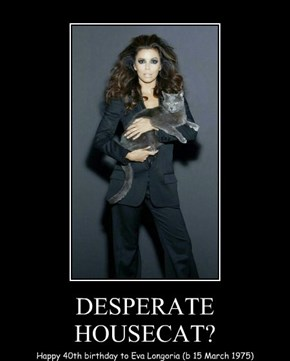 DESPERATE HOUSECAT?