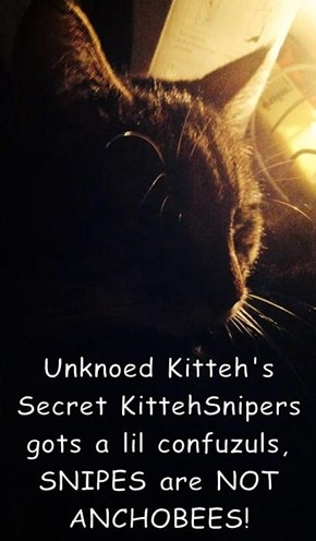 Unknoed Kitteh's Secret KittehSnipers gots a lil confuzuls, SNIPES are NOT ANCHOBEES!
