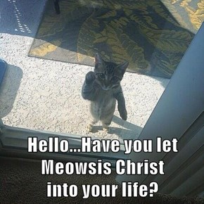 Hello...Have you let Meowsis Christ                     into your life?