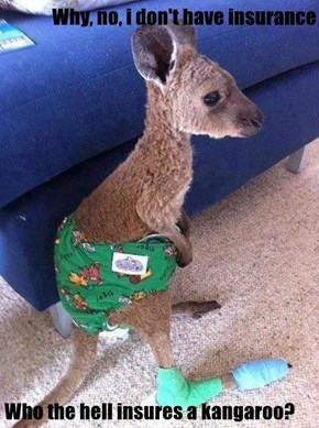 Why, no, i don't have insurance   Who the hell insures a kangaroo?