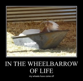 IN THE WHEELBARROW OF LIFE