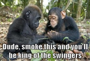 Dude, smoke this and you'll be king of the swingers