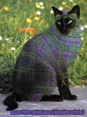 For PlaidCats