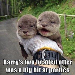 Barry's two headed otter was a big hit at parties