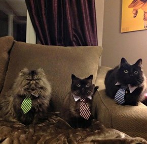 They Mean Business!