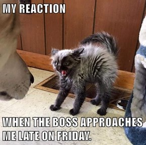 MY REACTION  WHEN THE BOSS APPROACHES ME LATE ON FRIDAY.