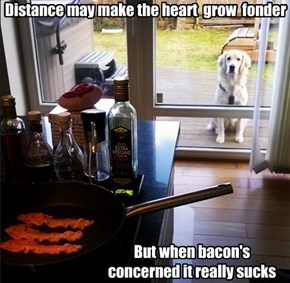 Distance may make the heart  grow  fonder