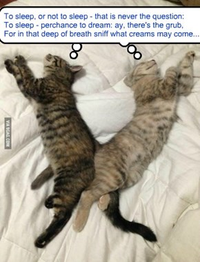 Hamlet kitties' nom dreams