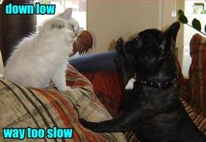 Teh Cat Will Nao Hi 5 Yor Fase