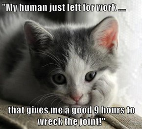 """""""My human just left for work ....  that gives me a good 9 hours to wreck the joint!"""""""