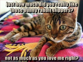 just how much did you really like those bunny rabbit slippers?  not as much as you love me right?