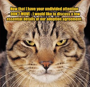 Now that I have your undivided attention  - DON'T MOVE - I would like to discuss a few essential details of our adoption agreement.