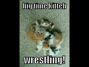 big time kitteh wrestling