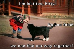 I'm lost too, kitty. Do you think we can find our way together?