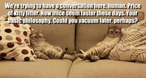 We're trying to have a conversation here, human. Price of kitty litter. How mice seem faster these days. Your basic philosophy. Could you vacuum later, perhaps?