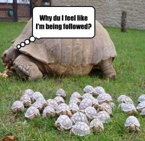Why du I feel like I'm being followed?