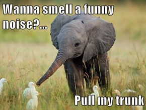 Wanna smell a funny noise?...  Pull my trunk