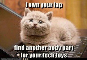 i own your lap   find another body part                                                                                                         for your tech toys