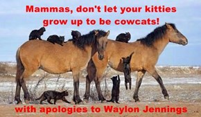 Mammas, don't let your kitties            grow up to be cowcats!  with apologies to Waylon Jennings