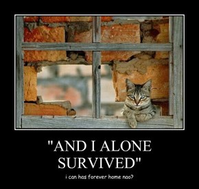 """AND I ALONE SURVIVED"""
