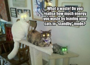 """What a waste! Do you realise how much energy you waste by leaving your cats in """"standby"""" mode?"""
