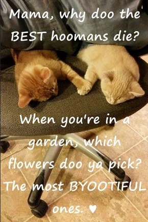 Mama, why doo the BEST hoomans die?  When you're in a garden, which flowers doo ya pick? The most BYOOTIFUL ones. ♥
