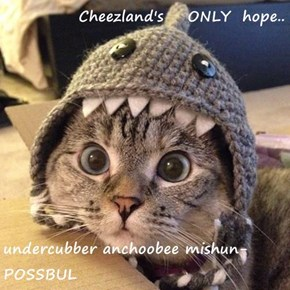 Cheezland's    ONLY  hope..  undercubber anchoobee mishun-POSSBUL