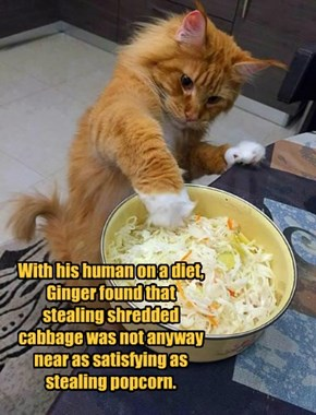 With his human on a diet, Ginger found that stealing shredded cabbage was not anyway near as satisfying as stealing popcorn.
