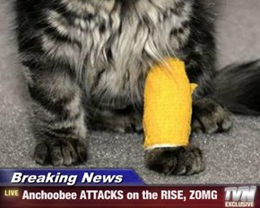 Breaking News - Anchoobee ATTACKS on the RISE, ZOMG