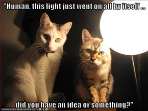 """Human, this light just went on all by itself ...  did you have an idea or something?"""