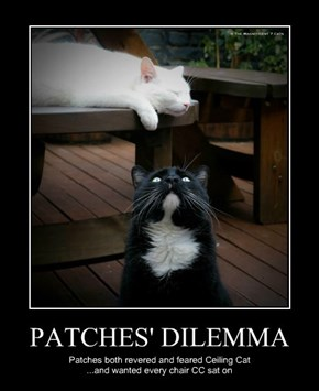 PATCHES' DILEMMA