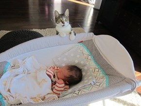Roxy the Cat is Skeptical About Her Humans' Baby
