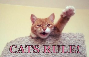CATS RULE!