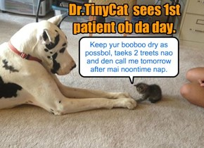 Dr.TinyCat is in!