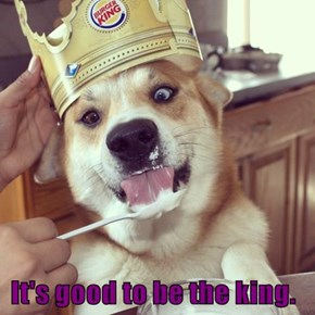 Hold My Crown Up Human