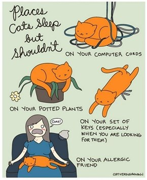 Places Cats Sleep, Where They Shouldn't