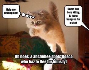 Bosco gets discovered!