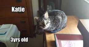 Allcats' kitteh 'Katie'