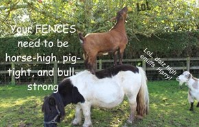 Your FENCES need to be horse-high, pig-tight, and bull-strong