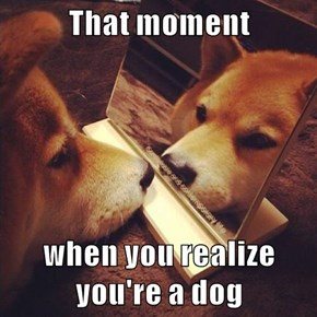 For Shiba Inu, It's a Good Moment