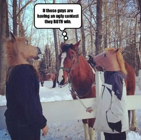 Since this horse has been in contests his whole life, for ONCE he finally gets to judge humans.