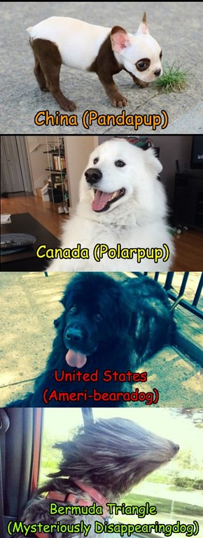 Beardogs from around the world