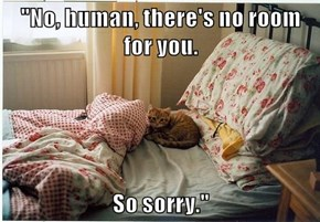 """""""No, human, there's no room for you.  So sorry."""""""