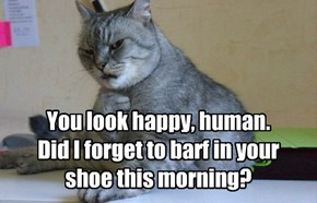 You look happy, human. Did I forget to barf in your shoe this morning?