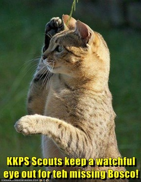 KKPS Scouts keep a watchful eye out for teh missing Bosco!