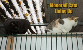 Monorail Cats Lining Up
