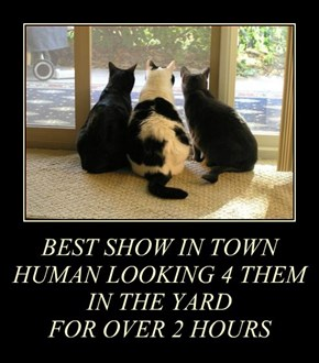 BEST SHOW IN TOWN HUMAN LOOKING 4 THEM IN THE YARD  FOR OVER 2 HOURS